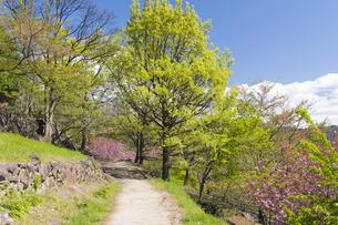 山の新緑の中の一本道の写真素材 [FYI04621563]