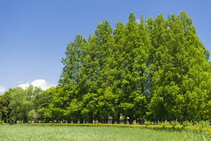 さきたま古墳公園の写真素材 [FYI04621569]