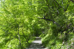 緑のトンネルの写真素材 [FYI04621597]