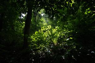 木漏れ日の写真素材 [FYI04621718]