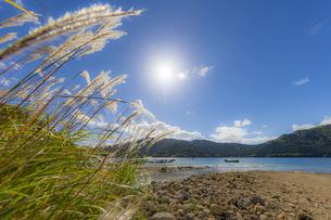 早秋の芦ノ湖畔に揺れるススキの写真素材 [FYI04621749]