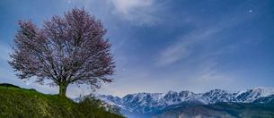 野平の一本桜の写真素材 [FYI04621890]