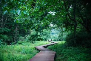 小網代の森の写真素材 [FYI04621953]