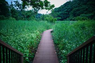 小網代の森の写真素材 [FYI04621957]