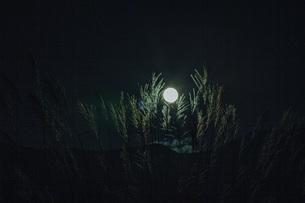 満月の写真素材 [FYI04622109]