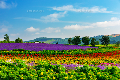 ぜるぶの丘の花畑の写真素材 [FYI04622416]