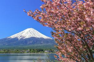 桜と富士山の写真素材 [FYI04623030]
