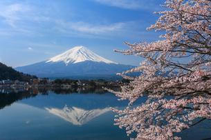 桜と逆さ富士の写真素材 [FYI04623031]