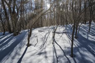 太陽が差し込む雪景色の写真素材 [FYI04623093]