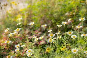 東山花の丘の花々の写真素材 [FYI04623195]