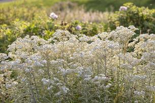 東山花の丘の花々の写真素材 [FYI04623198]