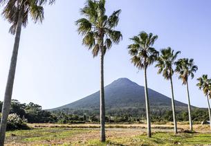 ヤシ並木越しに開聞岳を望むの写真素材 [FYI04623490]