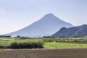 畑地帯から見る霞む開聞岳の写真素材 [FYI04623493]