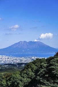 鹿児島の街並み越しに桜島を望むの写真素材 [FYI04623511]