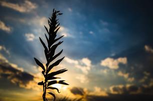 空と植物の写真素材 [FYI04623545]