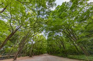 新緑の糺の森の中の写真素材 [FYI04623717]