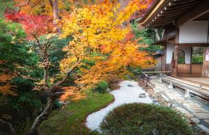 京都 嵯峨野 二尊院 本堂庭園の紅葉の写真素材 [FYI04623722]