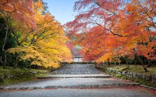 京都二尊院の参道「紅葉の馬場」の秋の情景の写真素材 [FYI04623723]