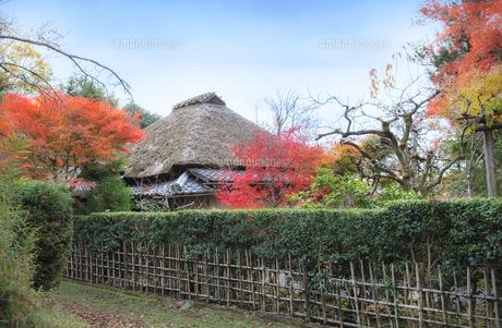 京都 落柿舎の紅葉の写真素材 [FYI04623724]