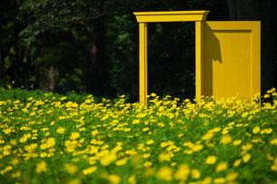 どこでもドアとお花畑の写真素材 [FYI04623806]