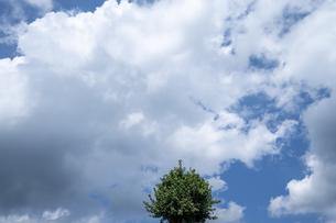 空 イチョウ 雲の写真素材 [FYI04624320]