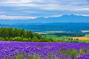 富良野の風景の写真素材 [FYI04624493]
