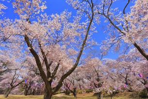 春日公園の写真素材 [FYI04624676]