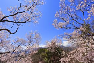 春日公園の写真素材 [FYI04624677]