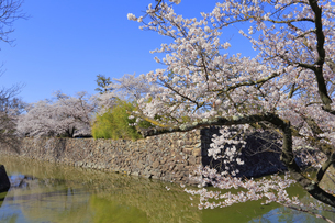松本城公園の写真素材 [FYI04624678]