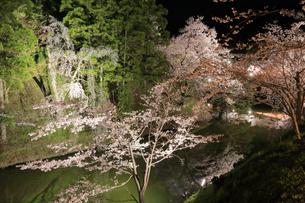 上田城跡公園の写真素材 [FYI04624687]