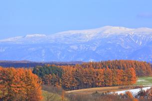 秋の美瑛の写真素材 [FYI04624702]