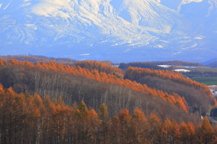 秋の美瑛の写真素材 [FYI04624703]
