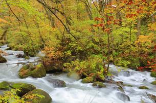 秋の奥入瀬渓流の写真素材 [FYI04624704]