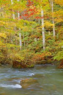 秋の奥入瀬渓流の写真素材 [FYI04624705]