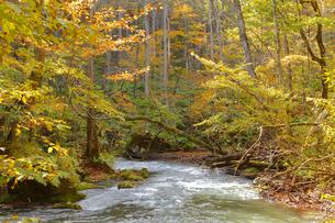 秋の奥入瀬渓流の写真素材 [FYI04624706]