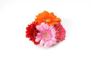 ガーベラの花束の写真素材 [FYI04624711]