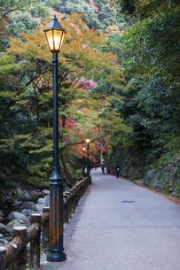 街灯と小道の写真素材 [FYI04624808]