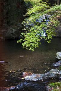 青紅葉と池の写真素材 [FYI04624810]