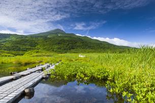 竜ヶ原湿原と鳥海山の写真素材 [FYI04624994]