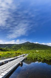 竜ヶ原湿原と鳥海山の写真素材 [FYI04624998]