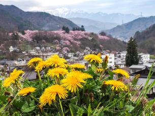 高遠の桜の写真素材 [FYI04625105]