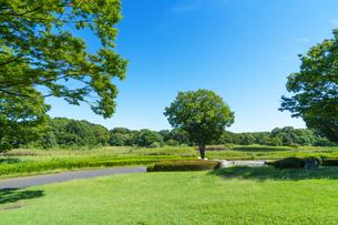 東京都 国営昭和記念公園 の写真素材 [FYI04625155]