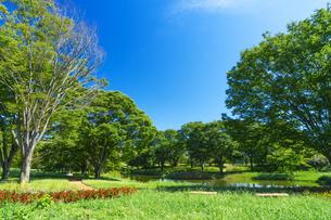 東京都 国営昭和記念公園 の写真素材 [FYI04625160]