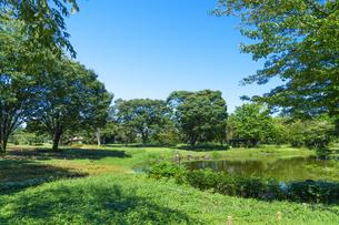 東京都 国営昭和記念公園 の写真素材 [FYI04625161]