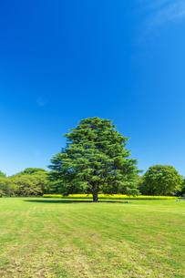 東京都 国営昭和記念公園 の写真素材 [FYI04625167]