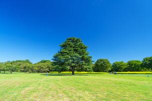 東京都 国営昭和記念公園 の写真素材 [FYI04625168]