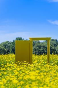 国営昭和記念公園 黄色いドアとキバナコスモスの写真素材 [FYI04625193]