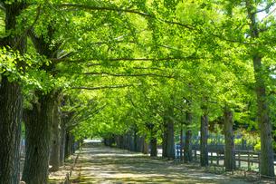 東京都 昭和記念公園 並木道の写真素材 [FYI04625290]