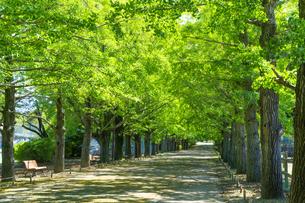 東京都 昭和記念公園 並木道の写真素材 [FYI04625291]