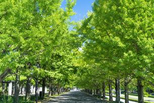 東京都 昭和記念公園の写真素材 [FYI04625297]